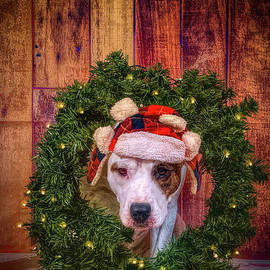 Puppy Wtih Christmas Wreath by Cindy Shebley