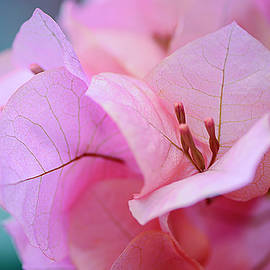 Pink  Flowers at Botanical Gardens by Cordia Murphy