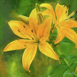 Yellow Lily by George Moore