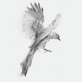 Bird by Ahmed Sayed