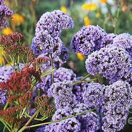 California Flowers by Douglas Miller