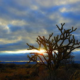 Mohave Desert Sunset by James Welch