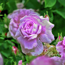 Pink Rose at Botanical Gardens by Cordia Murphy