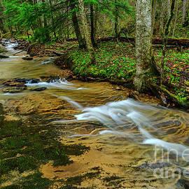 Spring along Anthony Creek by Thomas R Fletcher