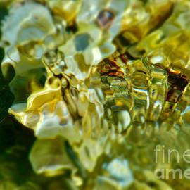 Seashell SeaWater Symbiosis Refraction by Debra Banks