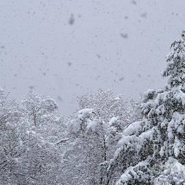 Vermont Snow Dreamscape by Debra Banks