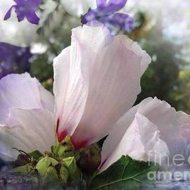 Rose Of Sharon by Debra Lynch