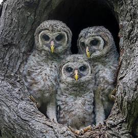 Adorable Siblings by Puttaswamy Ravishankar