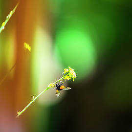 A beautiful bee on a yellow flower with a green blurred natural background by Uninteresting Arts