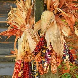 A Big Bunch Of Indian Corn by Robert Tubesing