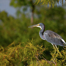 A Bird's Eye View by Gina Fitzhugh