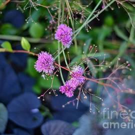 A Bit of Garden Color by Miriam Danar