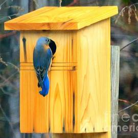 A Blue Birds home by Charlene Cox
