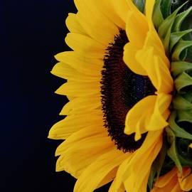 A Burst of Sunshine by Arlane Crump