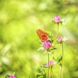 A Butterflies Life by Ryan McGehee