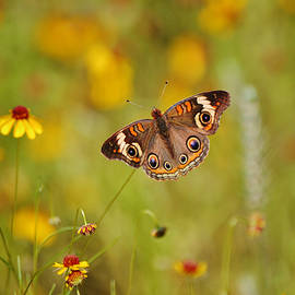 A Butterfly Flower on Stem by Gaby Ethington