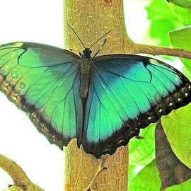 A Butterfly Of Summer by Rick Davis