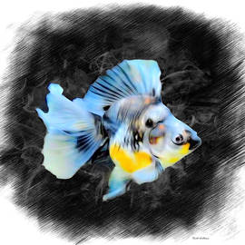 A Calico Sky Blue Ryukin Goldfish Sketch  by Scott Wallace Digital Designs