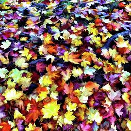 A Carpet of Autumn Leaves by Mo Barton