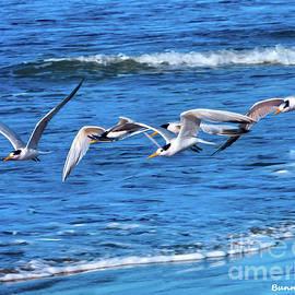 A Cotillion of Elegant Terns by Bunny Clarke