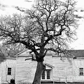 A Country Church and Its Tree by Gary Richards