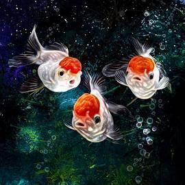 A Curious Group Of Red Cap Oranda Goldfish  by Scott Wallace Digital Designs