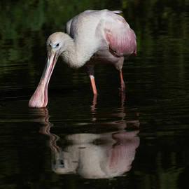 A day spent with a Spoonbill  by Ruth Jolly