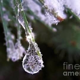 A Drop In The Ice Bucket by Lori Lafargue