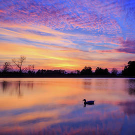 A Duck At Sunset by James Eddy