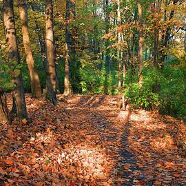 A Fall Park Path by Robert Tubesing