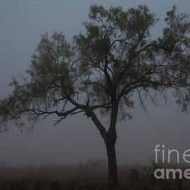 A Foggy Morning Stroll on Del Mar Ranch by Bob Phillips