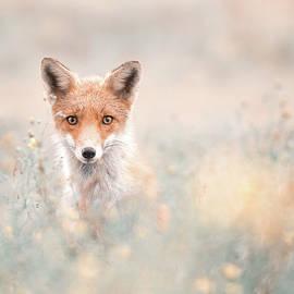 A Fox Bouquet by Roeselien Raimond