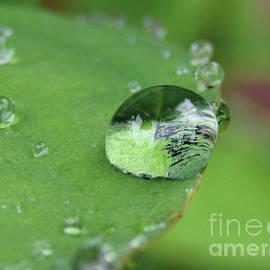 A Gem On A Rainy Day by Kim Tran