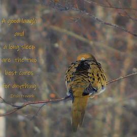 A good laugh and a long sleep by Karen Cook