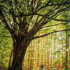 A Great Place to Rest by Alana Ranney