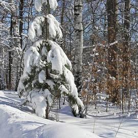 A Snowy Coat by Ann Brown
