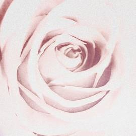 A Hint of Rose by Eileen Backman