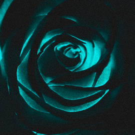 A Hint of Rose Inverted by Eileen Backman