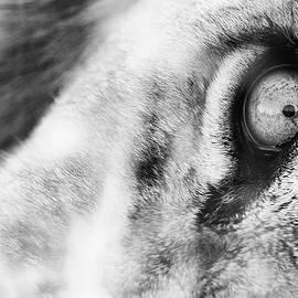 A Lion's Eye by Max Waugh