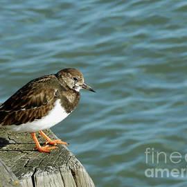 A Little Bird Told Me by Kathryn Jones