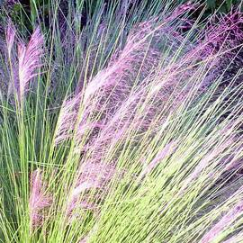 A Little Patch of Muhly Grass by Barbie Corbett-Newmin