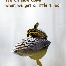 A Little Tired - Meme by Brian Wallace