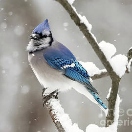 A Mouthful Of Snow by Tina LeCour