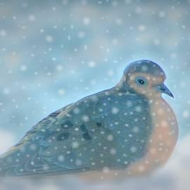 A Nest of Snow by Angela Davies