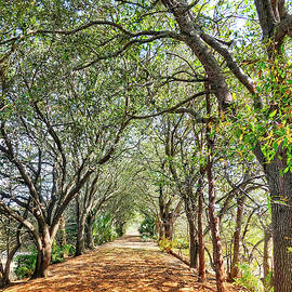A Path to Nature by Kathi Isserman