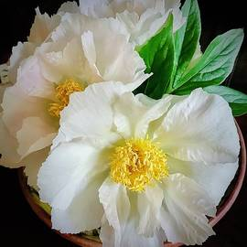 A Plate Full Of Peonies by Alida M Haslett