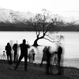A popular Tree, New Zealand by Angelika Vogel