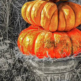 A Pot Full Of Pumpkins by Jo Ann Gregg