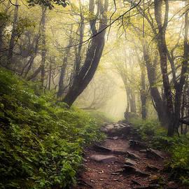 A Quiet Walk by Michelle Newport