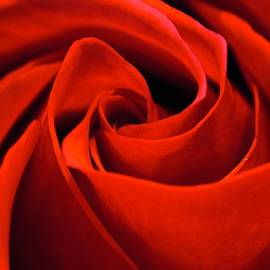 A Red, Red Rose by Blue Lens Photography UK photography by Neil R Finlay
